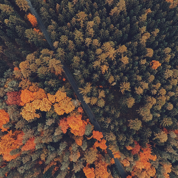 iPapers.co-Apple-iPhone-iPad-Macbook-iMac-wallpaper-nq09-earthview-wood-forest-nature-wallpaper