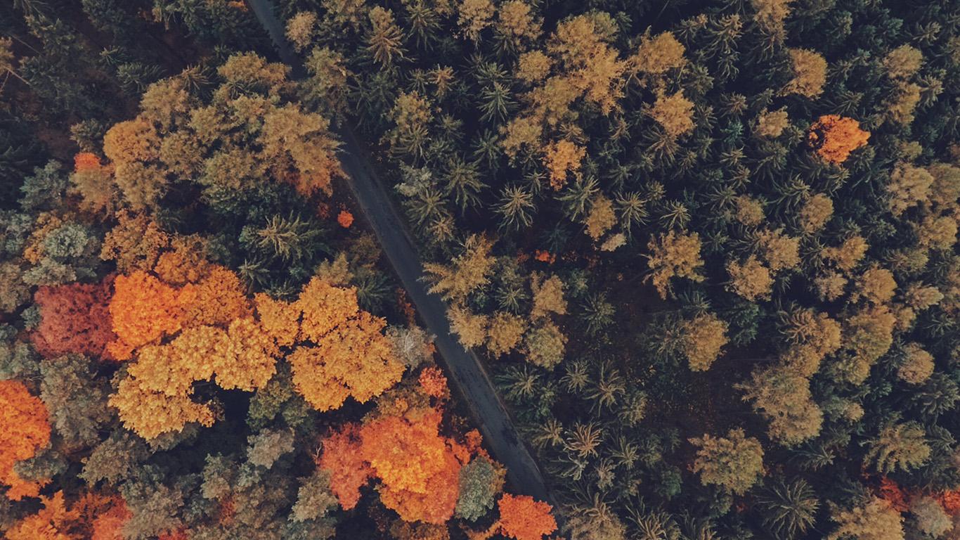 desktop-wallpaper-laptop-mac-macbook-air-nq09-earthview-wood-forest-nature-wallpaper