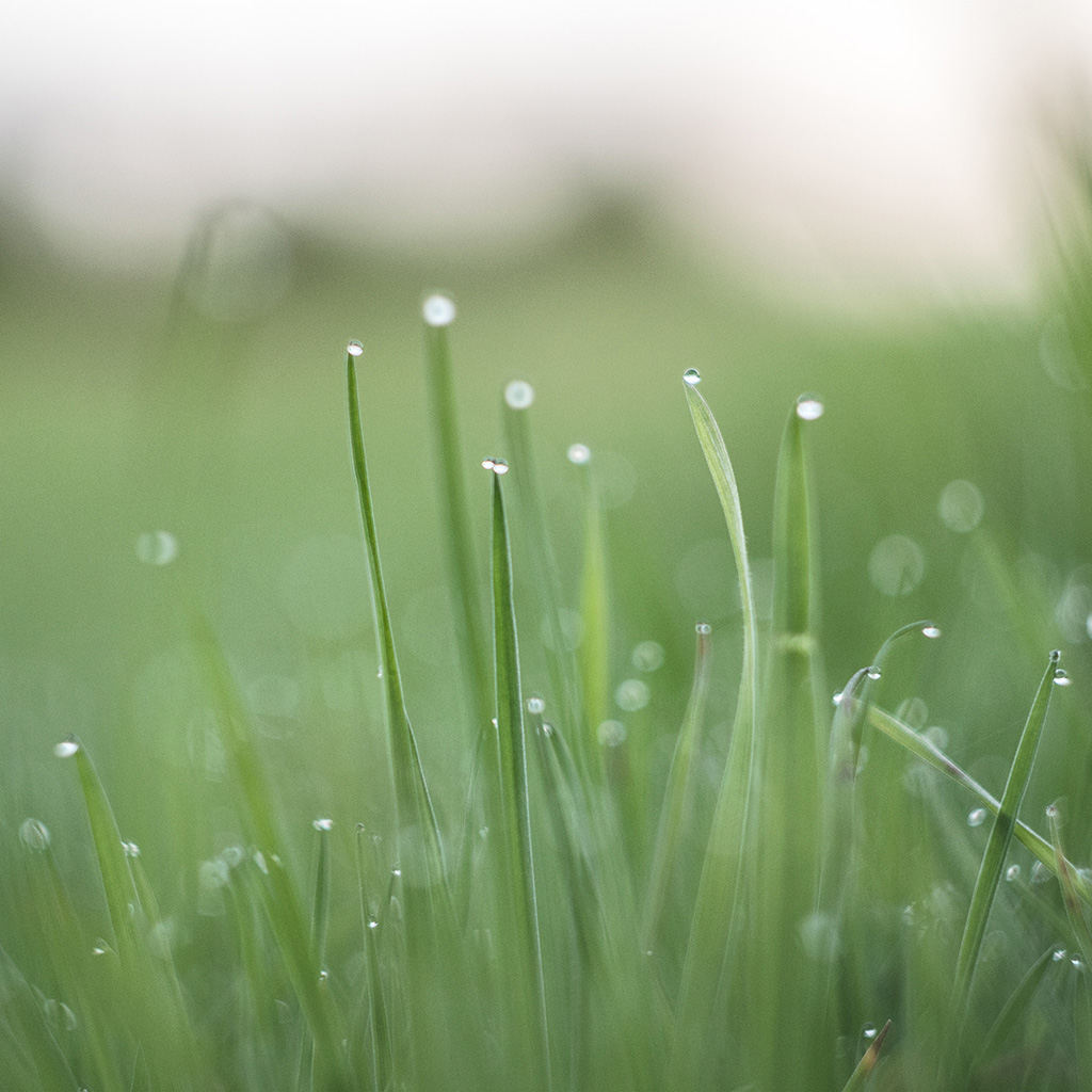 wallpaper-nq11-morning-dew-green-nature-wallpaper