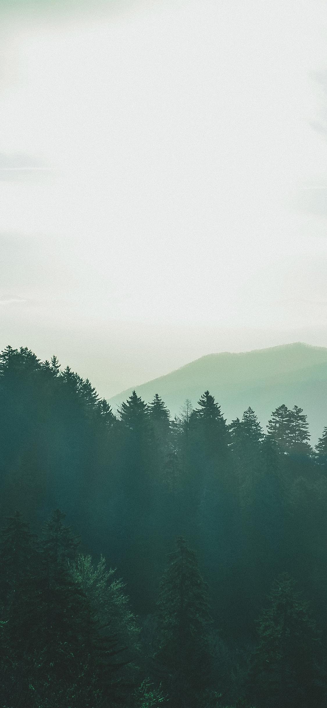 Nq14 Sunny Day Mountain Green Nature Wallpaper