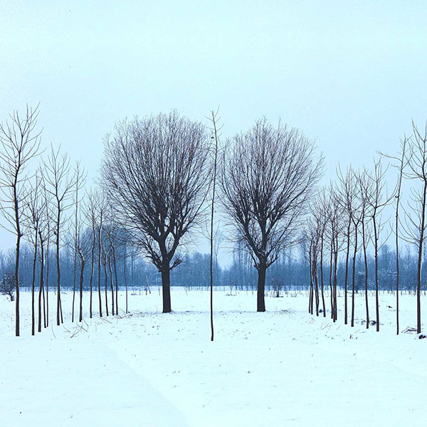 iPapers.co-Apple-iPhone-iPad-Macbook-iMac-wallpaper-nq41-winter-tree-cold-snow-nature-wallpaper