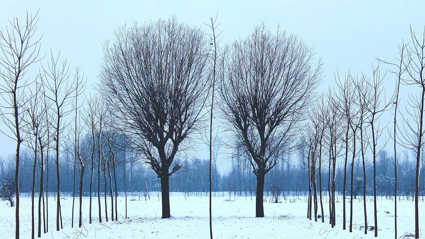 desktop-wallpaper-laptop-mac-macbook-air-nq41-winter-tree-cold-snow-nature-wallpaper