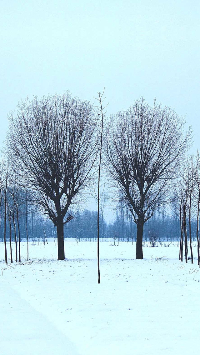 freeios8.com-iphone-4-5-6-plus-ipad-ios8-nq41-winter-tree-cold-snow-nature
