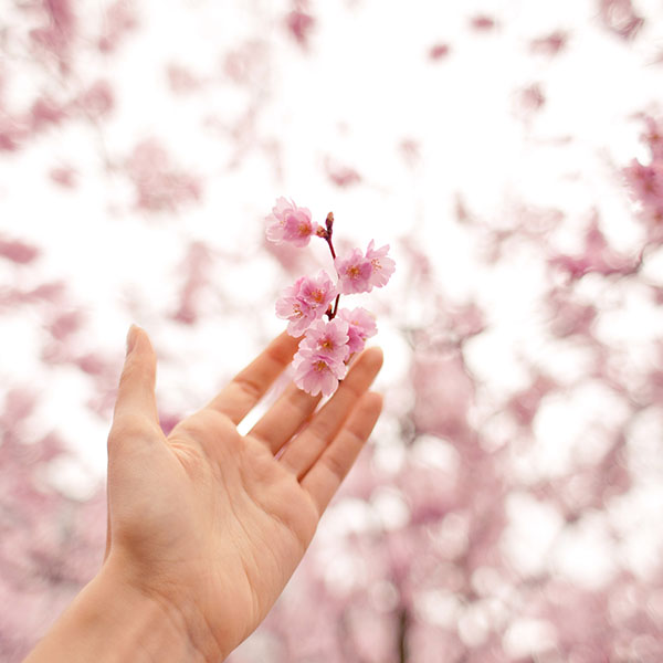 iPapers.co-Apple-iPhone-iPad-Macbook-iMac-wallpaper-nq45-spring-cherry-blossom-bokeh-nature-wallpaper