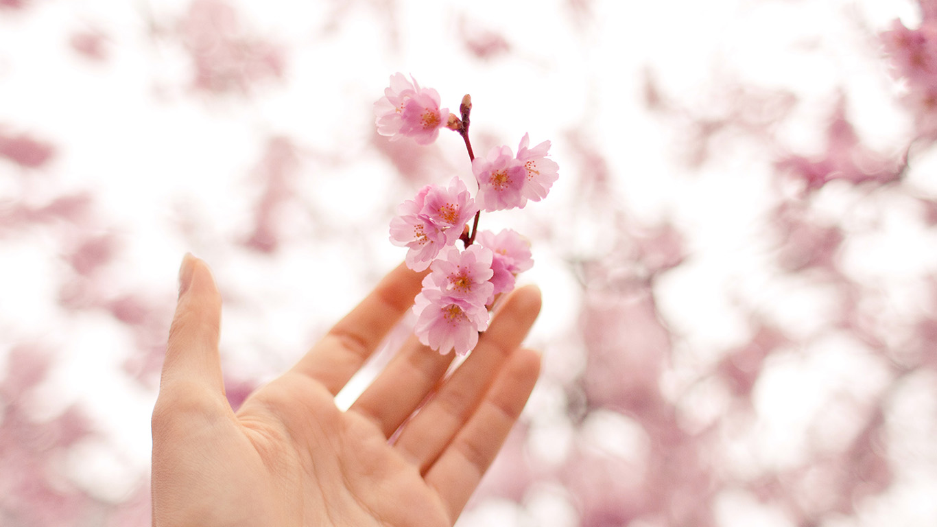 desktop-wallpaper-laptop-mac-macbook-air-nq45-spring-cherry-blossom-bokeh-nature-wallpaper