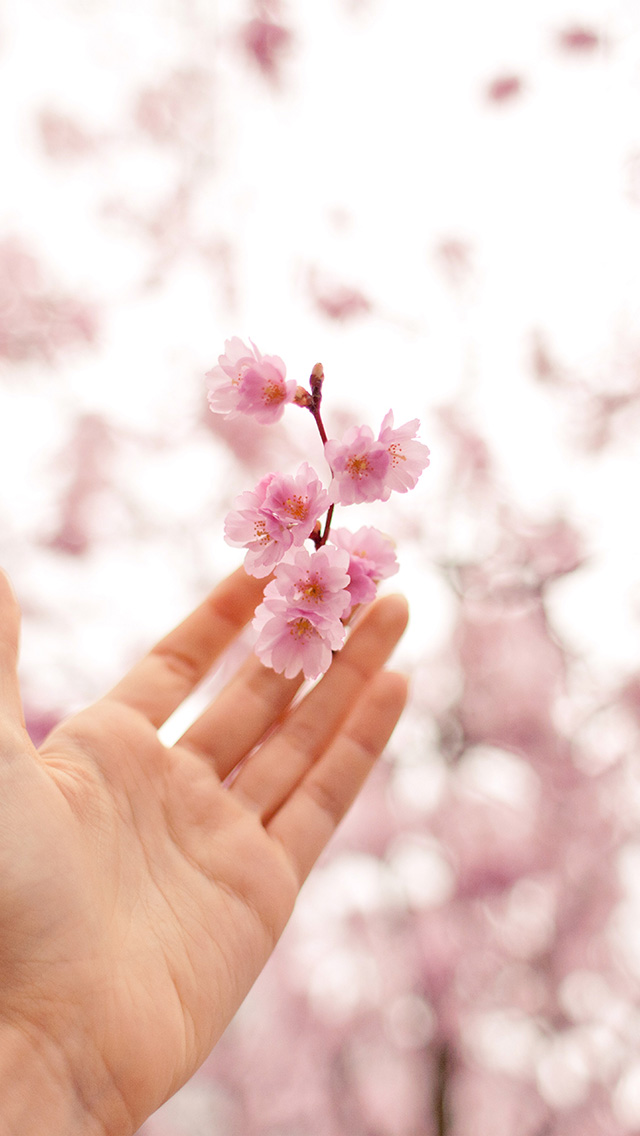 freeios8.com-iphone-4-5-6-plus-ipad-ios8-nq45-spring-cherry-blossom-bokeh-nature