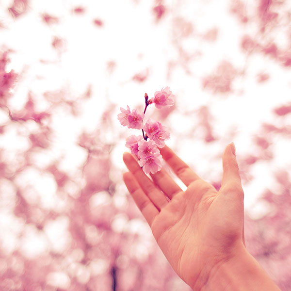 iPapers.co-Apple-iPhone-iPad-Macbook-iMac-wallpaper-nq46-spring-cherry-blossom-bokeh-nature-pink-wallpaper