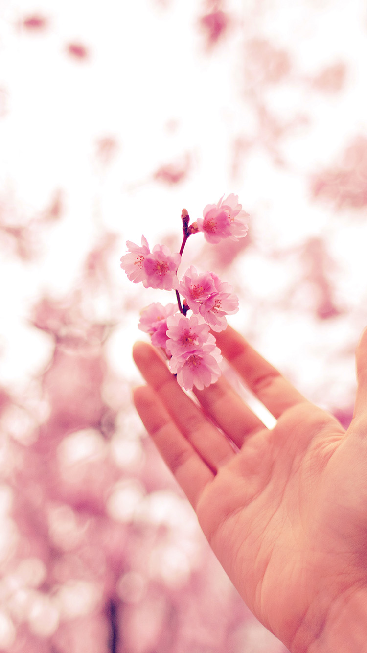 Papers.co-iPhone5-iphone6-plus-wallpaper-nq46-spring-cherry-blossom-bokeh-nature-pink