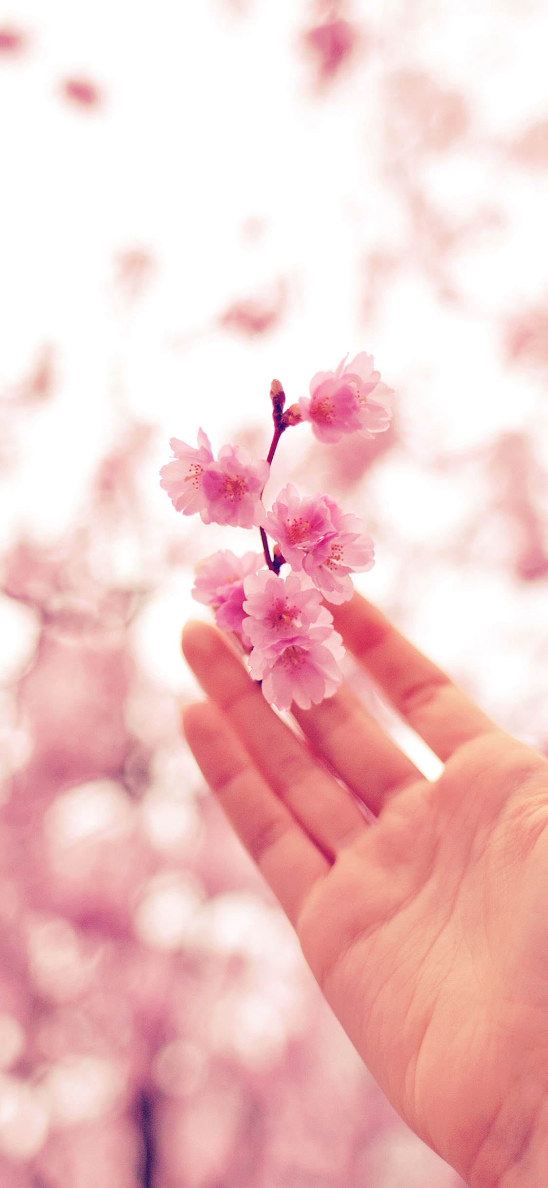 iPhonexpapers.com-Apple-iPhone-wallpaper-nq46-spring-cherry-blossom-bokeh-nature-pink