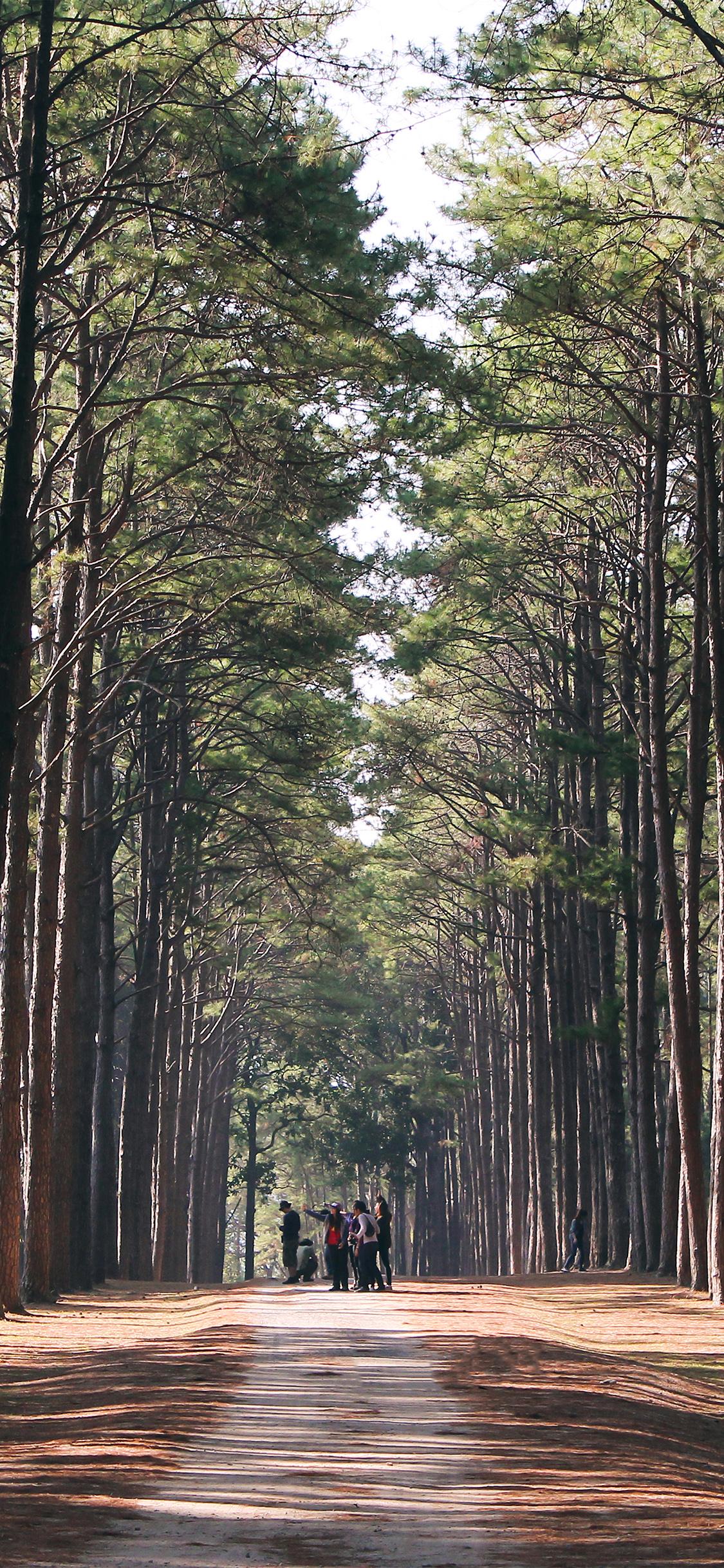 iPhoneXpapers.com-Apple-iPhone-wallpaper-nq59-wood-wild-road-healing-nature