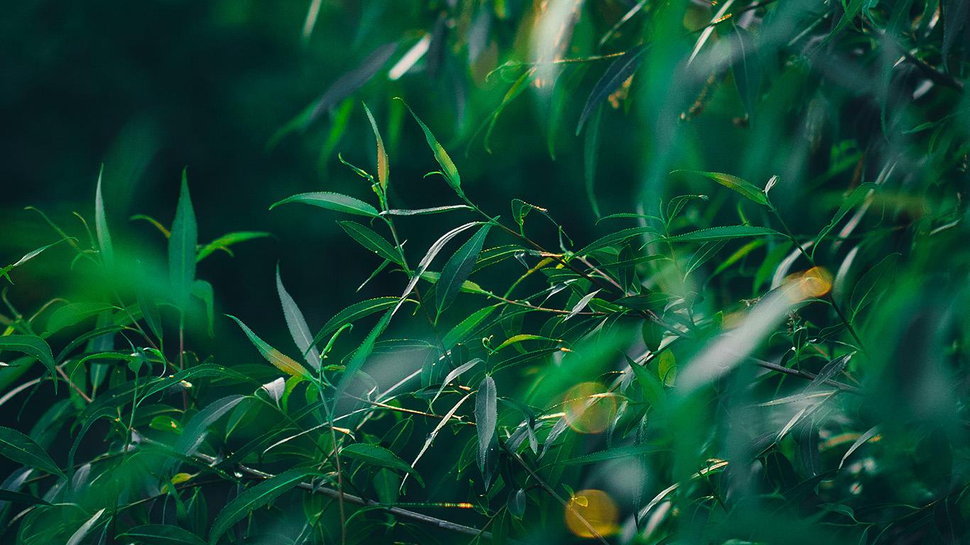 desktop-wallpaper-laptop-mac-macbook-air-nq63-leaf-green-bokeh-summer-nature-wallpaper