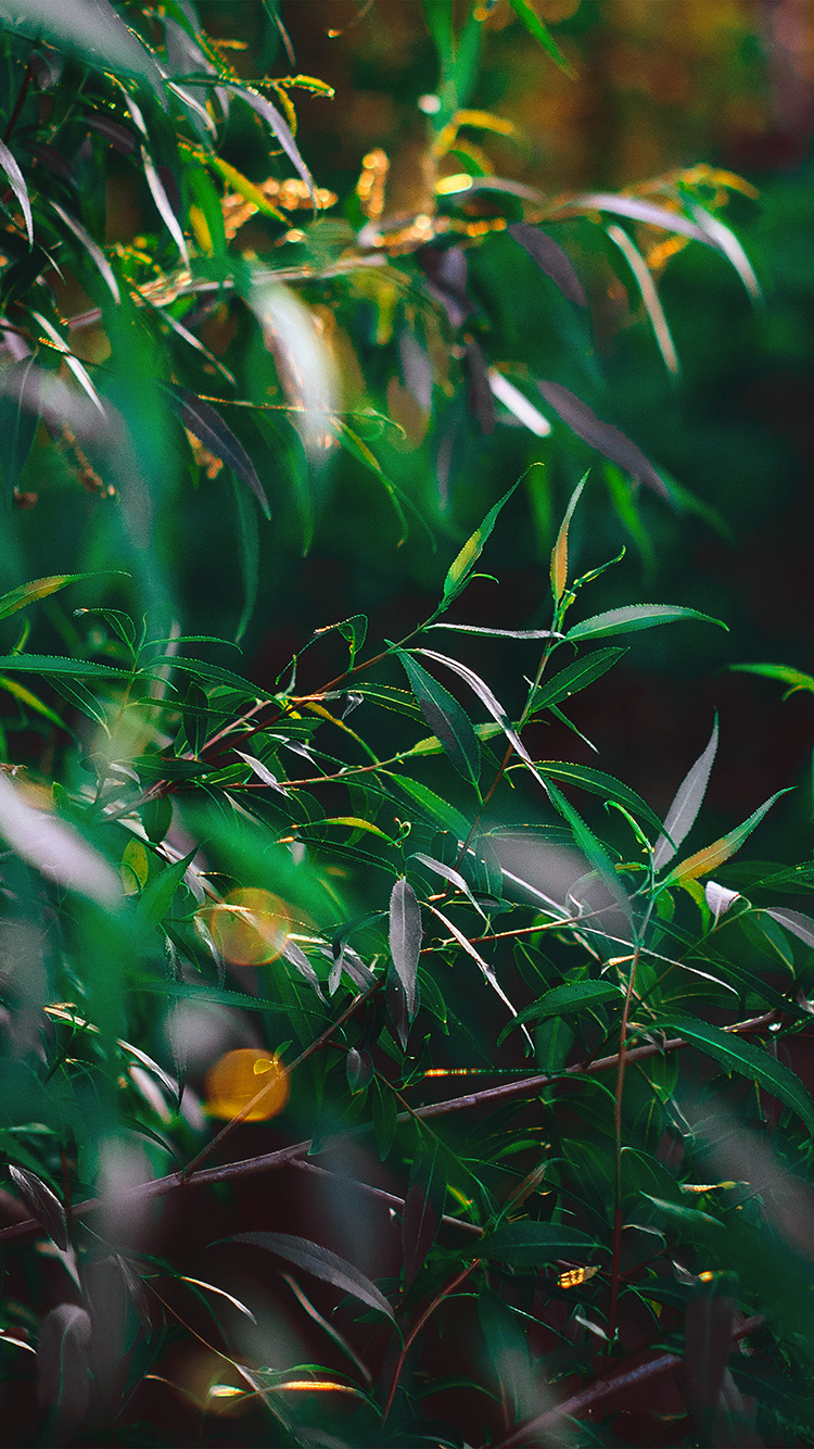 iPhone7papers.com-Apple-iPhone7-iphone7plus-wallpaper-nq64-leaf-green-bokeh-summer-nature-morning