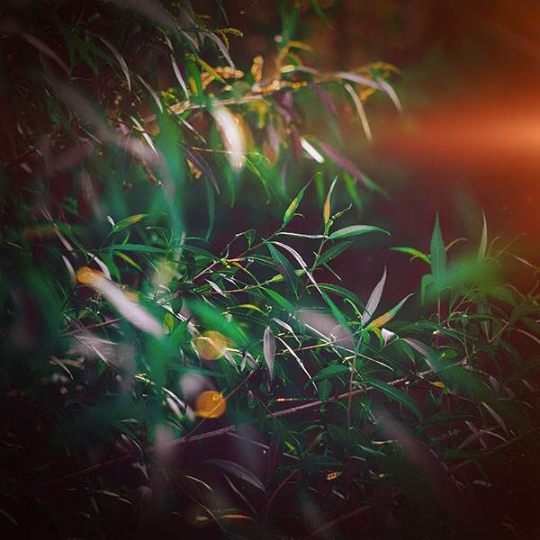 iPapers.co-Apple-iPhone-iPad-Macbook-iMac-wallpaper-nq65-leaf-green-bokeh-summer-nature-morning-flare-wallpaper