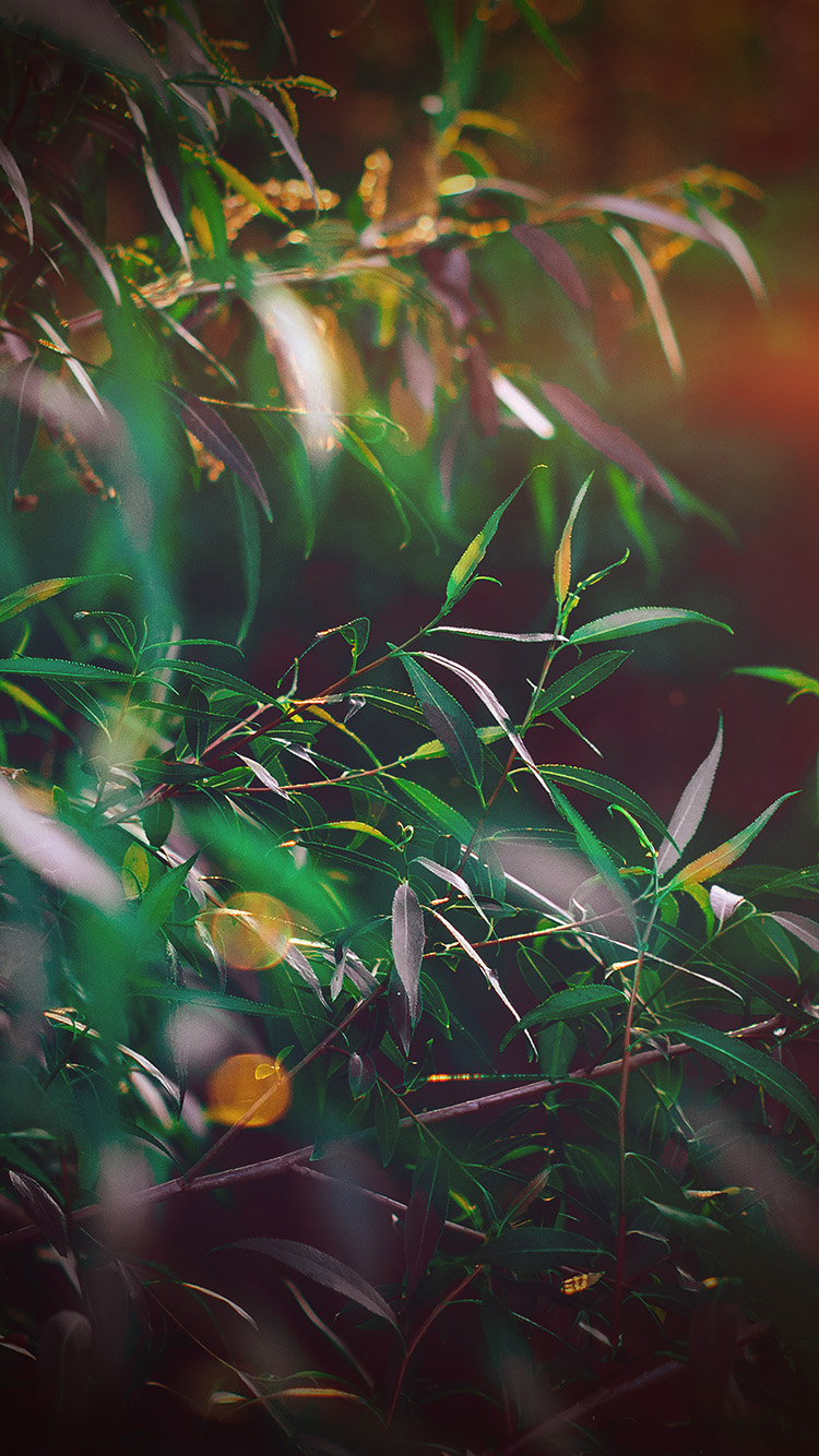 iPhone6papers.co-Apple-iPhone-6-iphone6-plus-wallpaper-nq65-leaf-green-bokeh-summer-nature-morning-flare