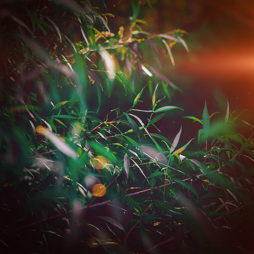 wallpaper-nq65-leaf-green-bokeh-summer-nature-morning-flare-wallpaper