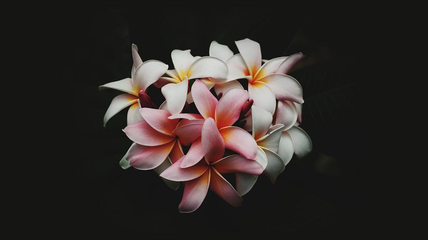 Nq75 Flower Dark Nature Wallpaper
