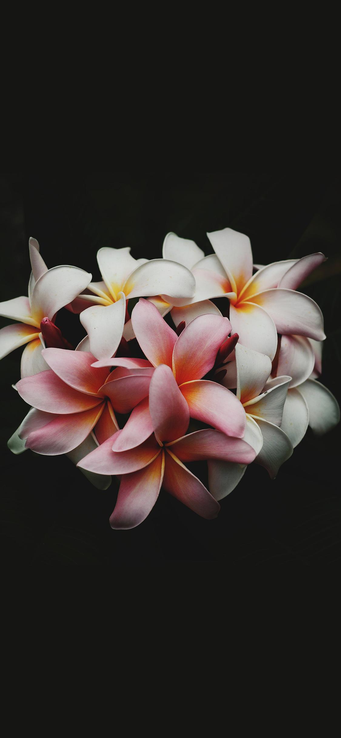 iPhoneXpapers.com-Apple-iPhone-wallpaper-nq75-flower-dark-nature