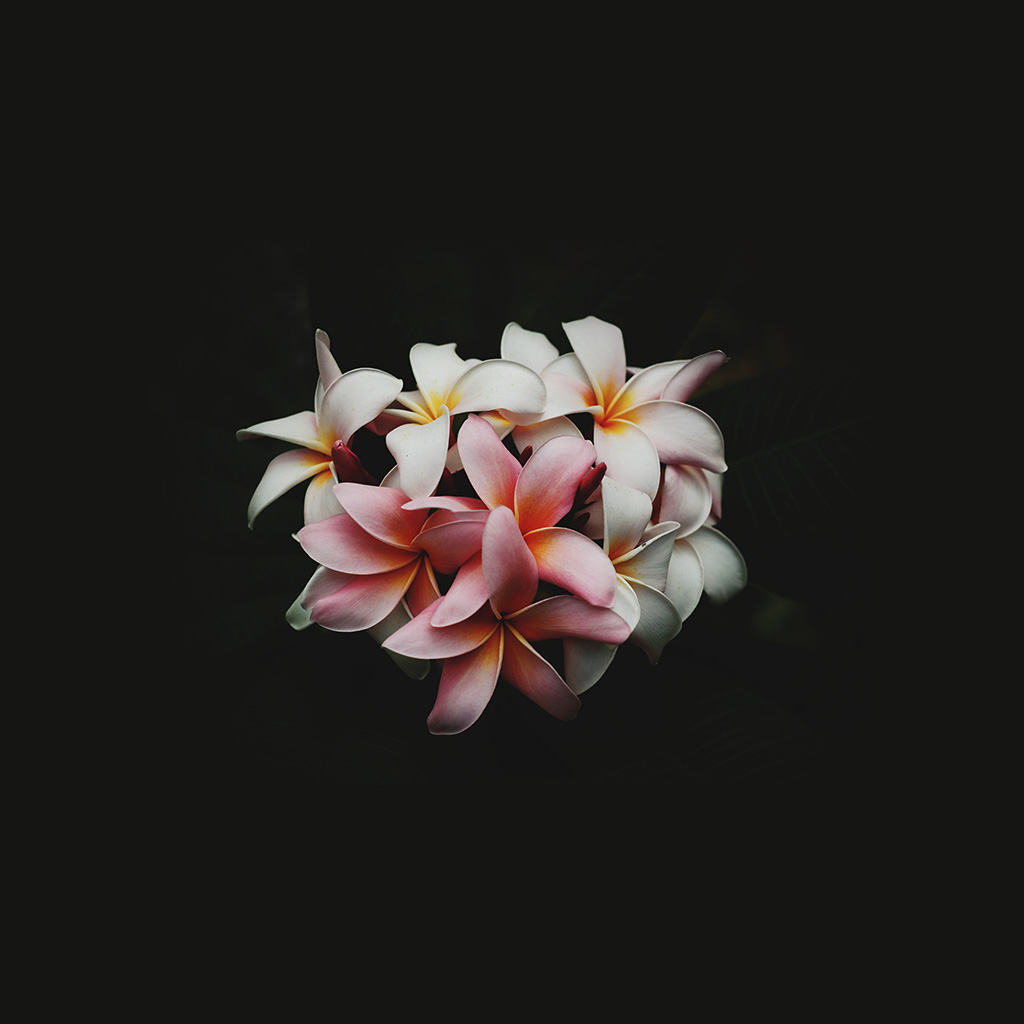 wallpaper-nq75-flower-dark-nature-wallpaper