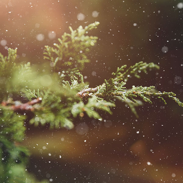 iPapers.co-Apple-iPhone-iPad-Macbook-iMac-wallpaper-nq89-rain-wood-bokeh-forest-nature-wallpaper