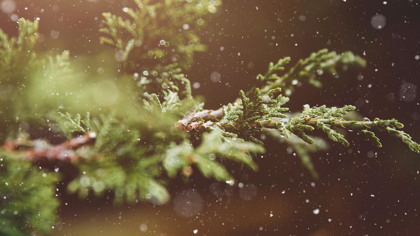 desktop-wallpaper-laptop-mac-macbook-air-nq89-rain-wood-bokeh-forest-nature-wallpaper