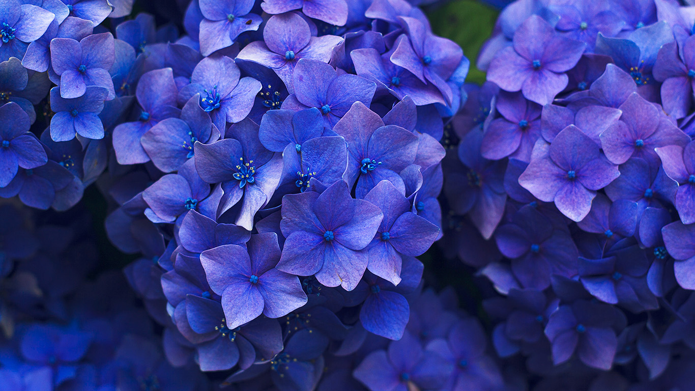 nr08-flower-spring-blue-purple-nature-wallpaper