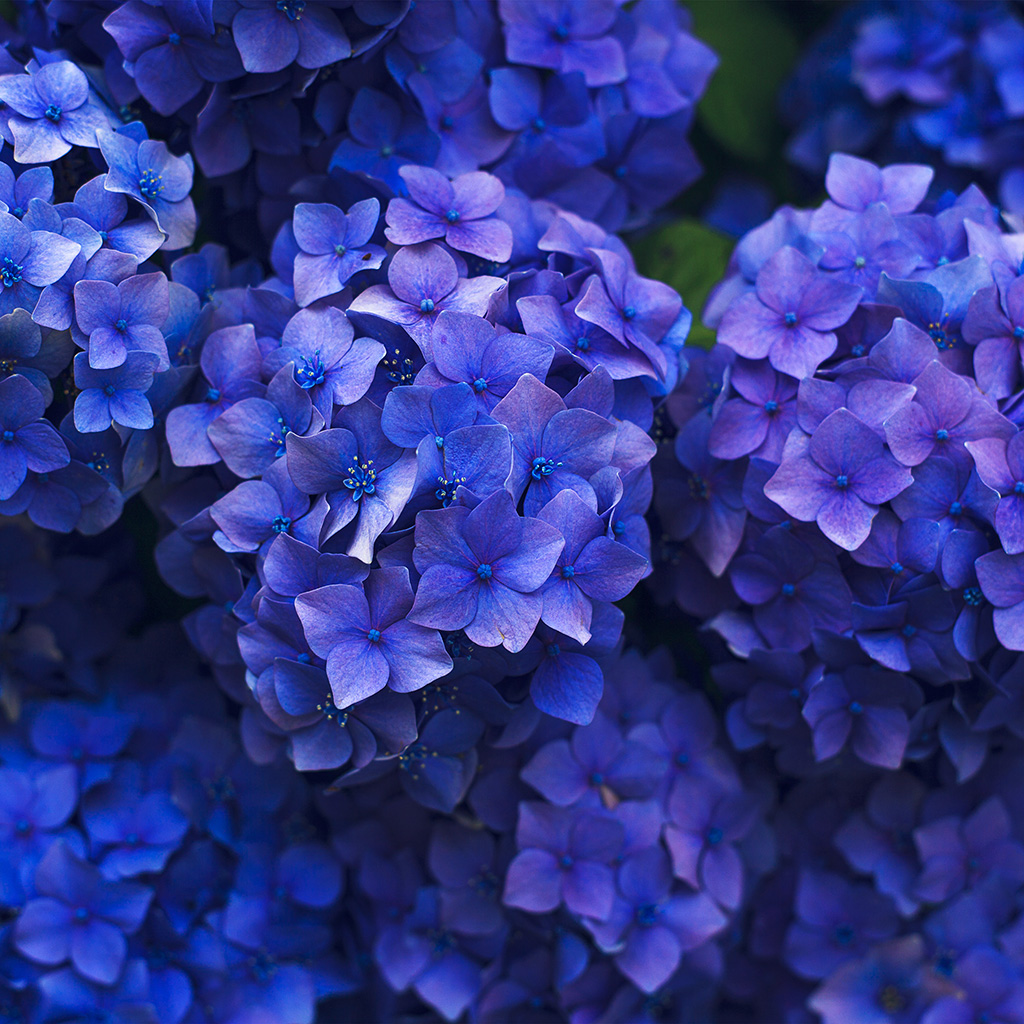 wallpaper-nr08-flower-spring-blue-purple-nature-wallpaper