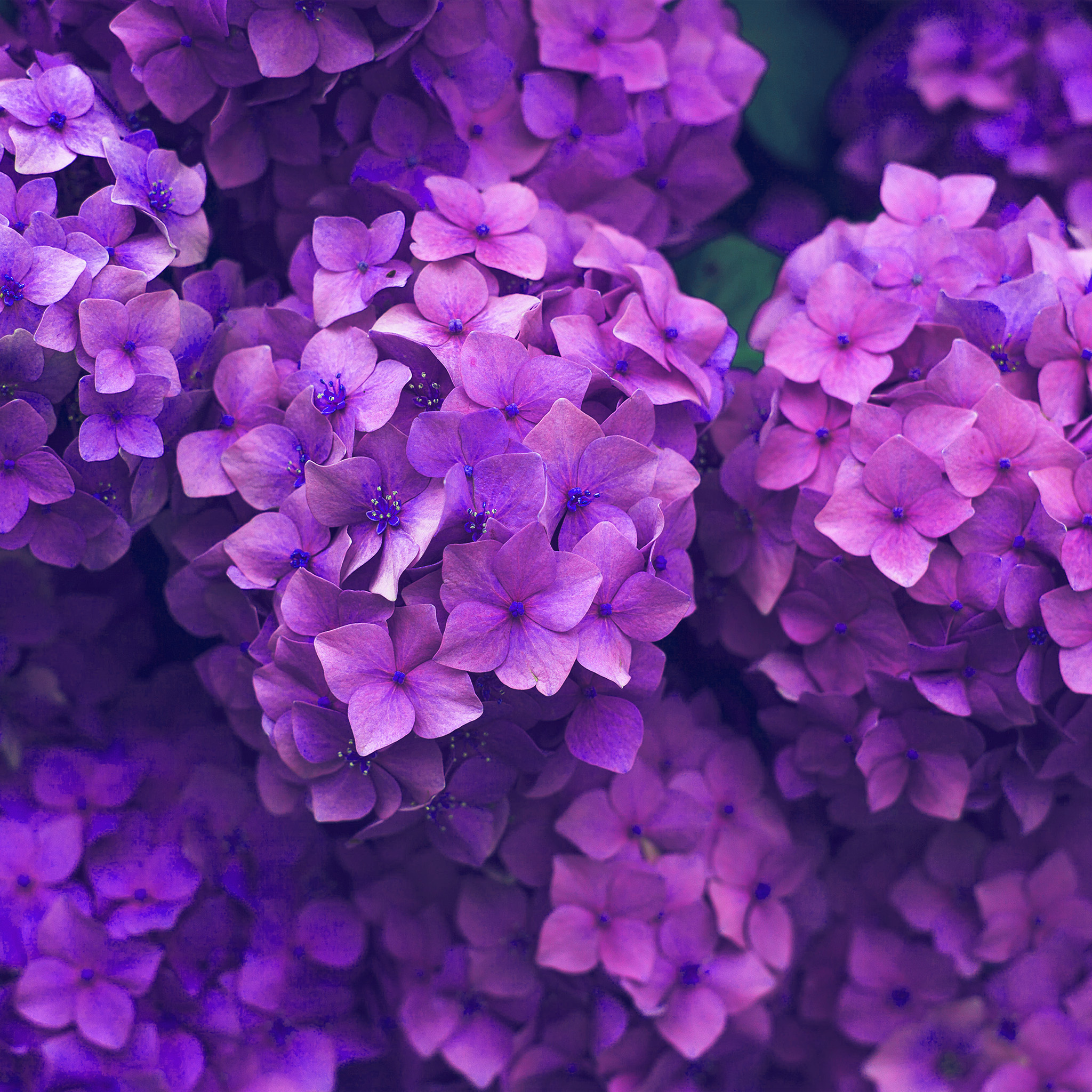 nr09-flower-spring-pink-purple-nature-wallpaper