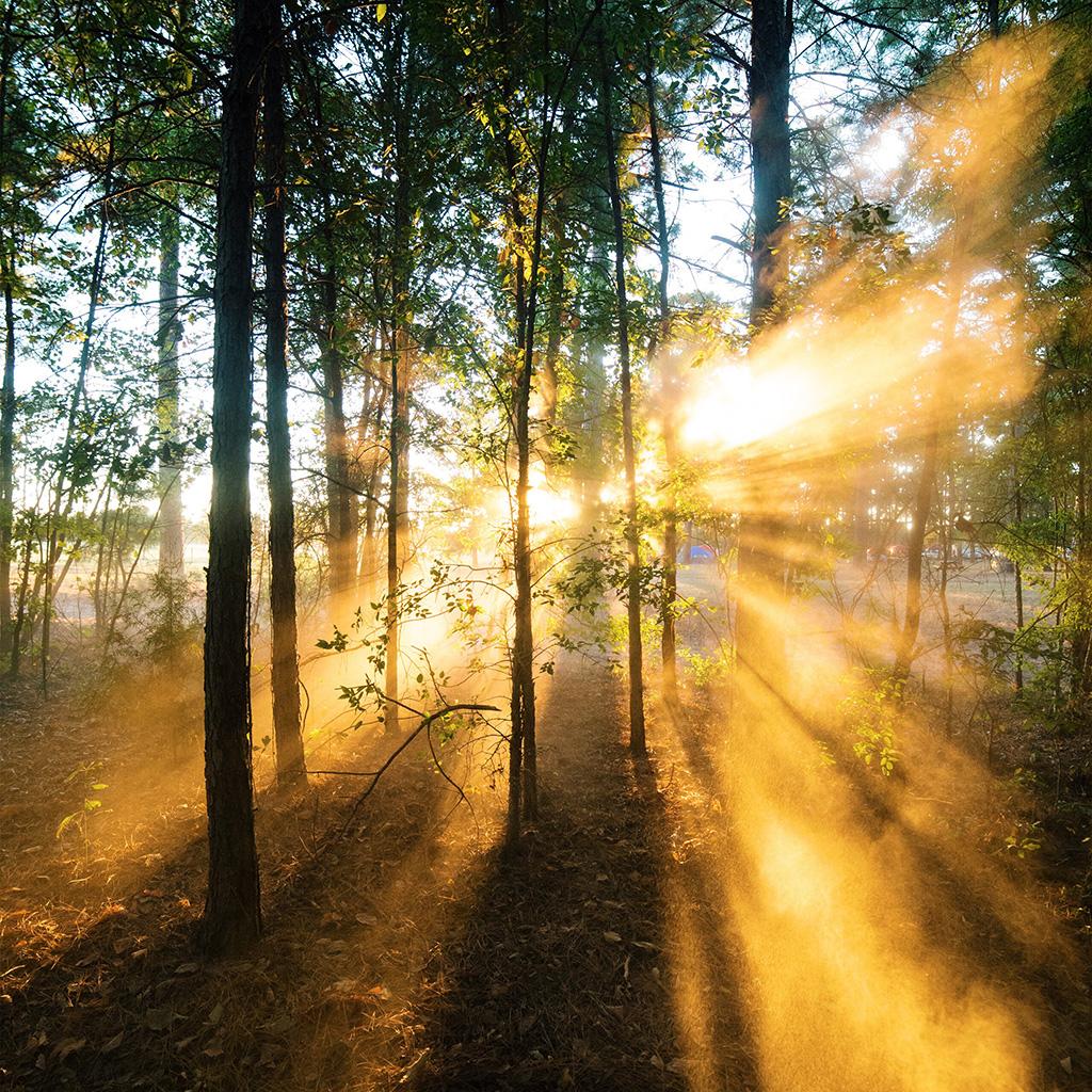 Nature: Nr18-forest-wood-light-sun-summer-nature-wallpaper