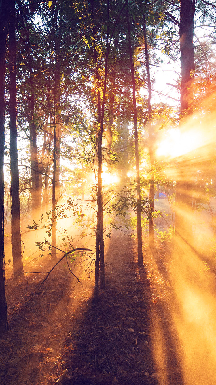 iPhone7papers.com-Apple-iPhone7-iphone7plus-wallpaper-nr19-forest-wood-light-sun-summer-nature-flare