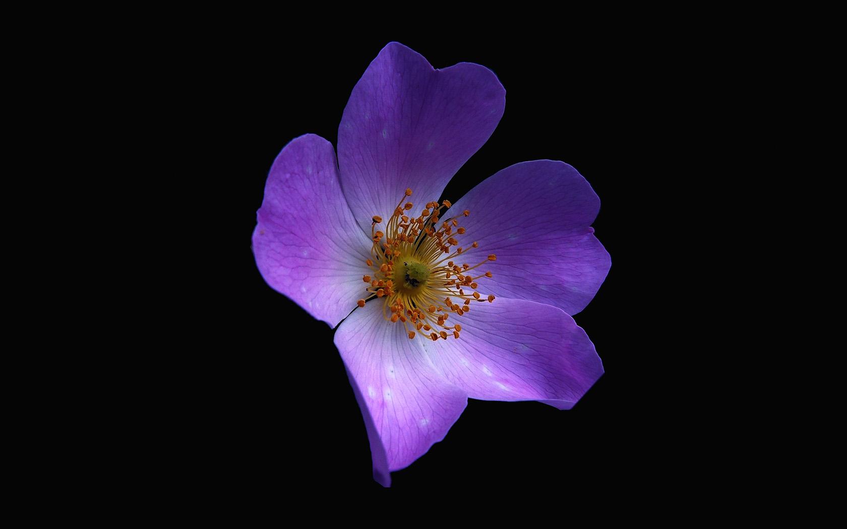 nr38-macro-flower-dark-purple-nature-wallpaper