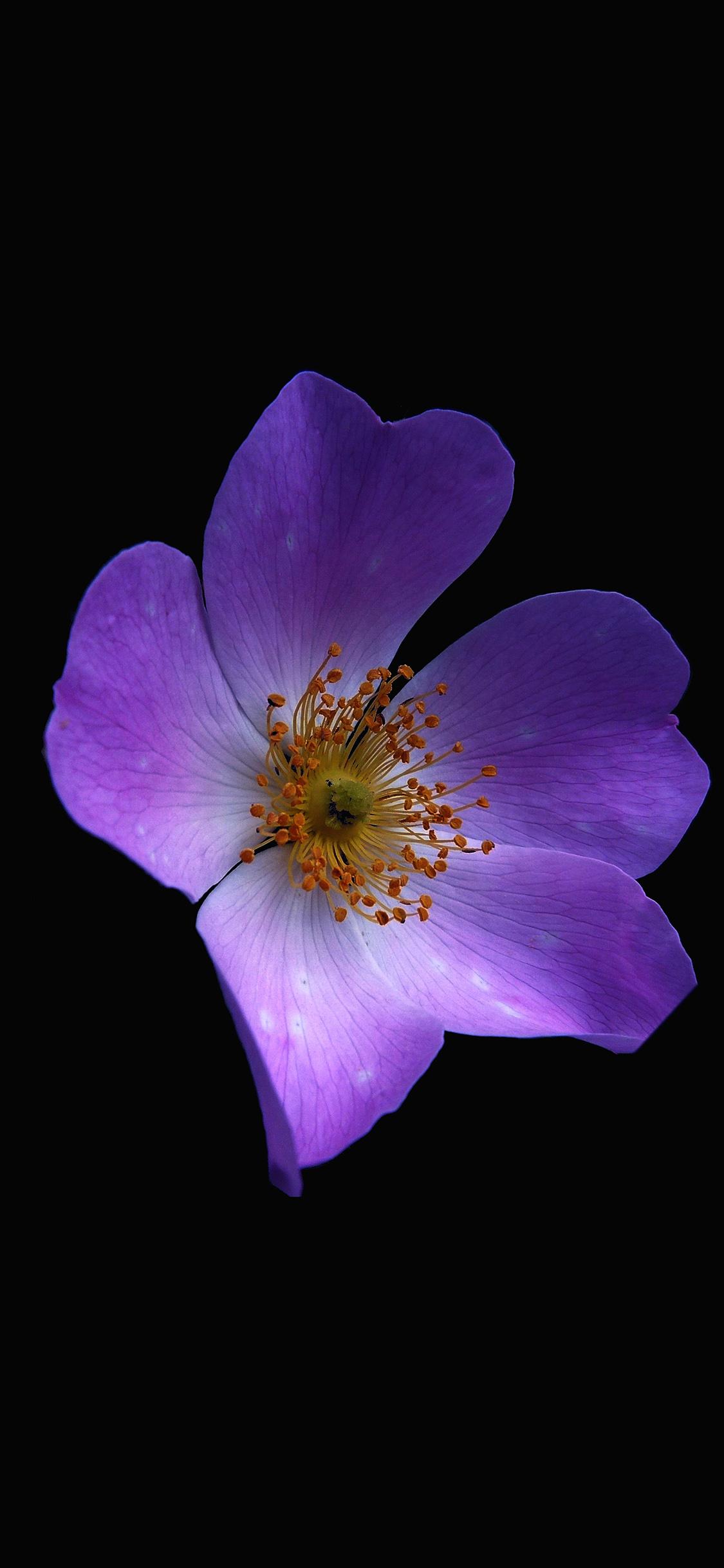 iPhoneXpapers.com-Apple-iPhone-wallpaper-nr38-macro-flower-dark-purple-nature