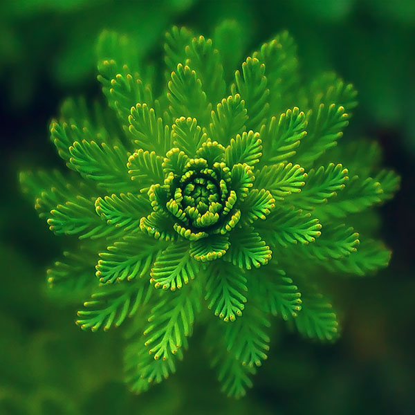 iPapers.co-Apple-iPhone-iPad-Macbook-iMac-wallpaper-ns00-flower-green-leaf-nature-wallpaper