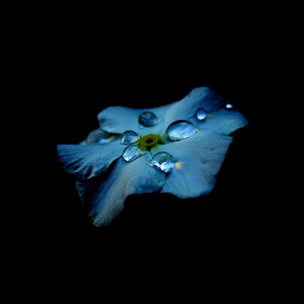 iPapers.co-Apple-iPhone-iPad-Macbook-iMac-wallpaper-ns36-flower-blue-dark-minimal-nature-wallpaper