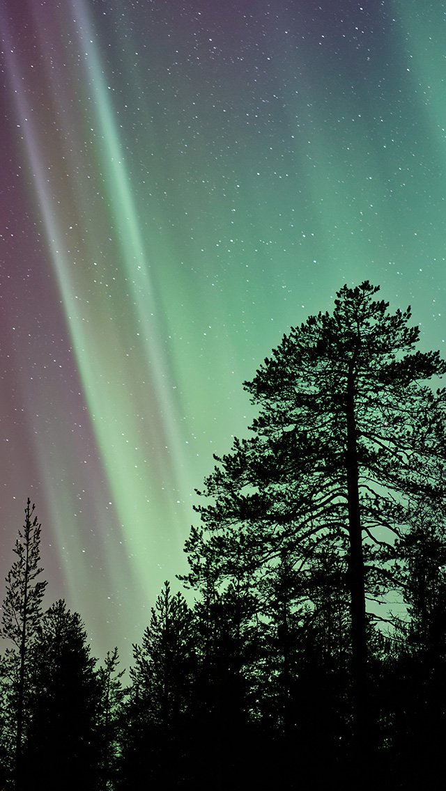 freeios8.com-iphone-4-5-6-plus-ipad-ios8-ns47-aurora-night-tree-nature