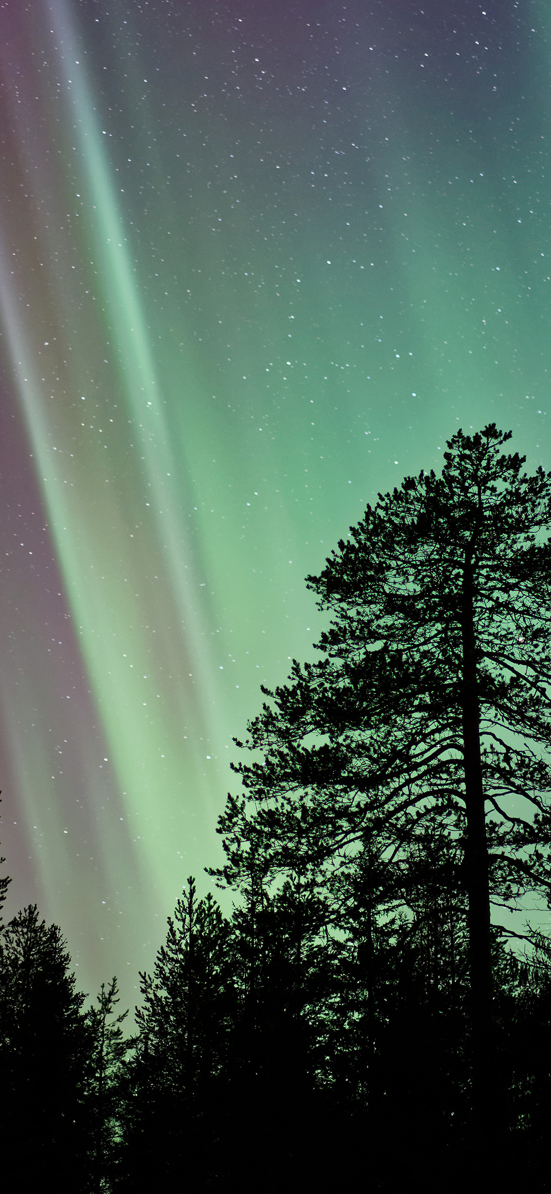 iPhoneXpapers.com-Apple-iPhone-wallpaper-ns47-aurora-night-tree-nature