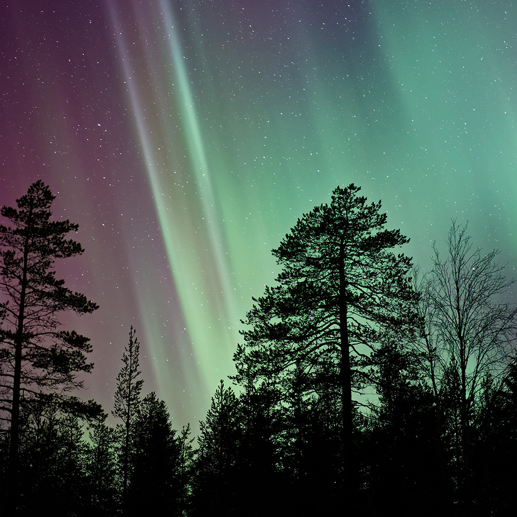 wallpaper-ns47-aurora-night-tree-nature-wallpaper