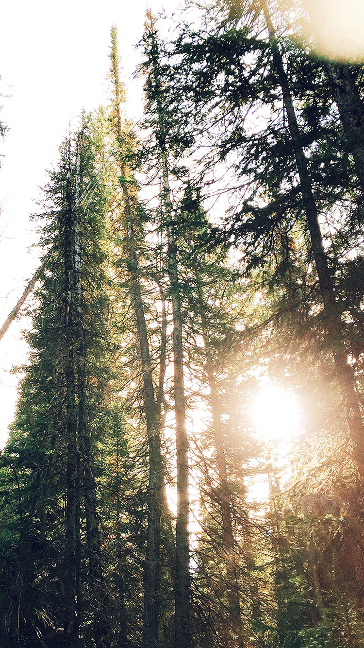 Papers.co-iPhone5-iphone6-plus-wallpaper-nt20-tree-sunshine-nature