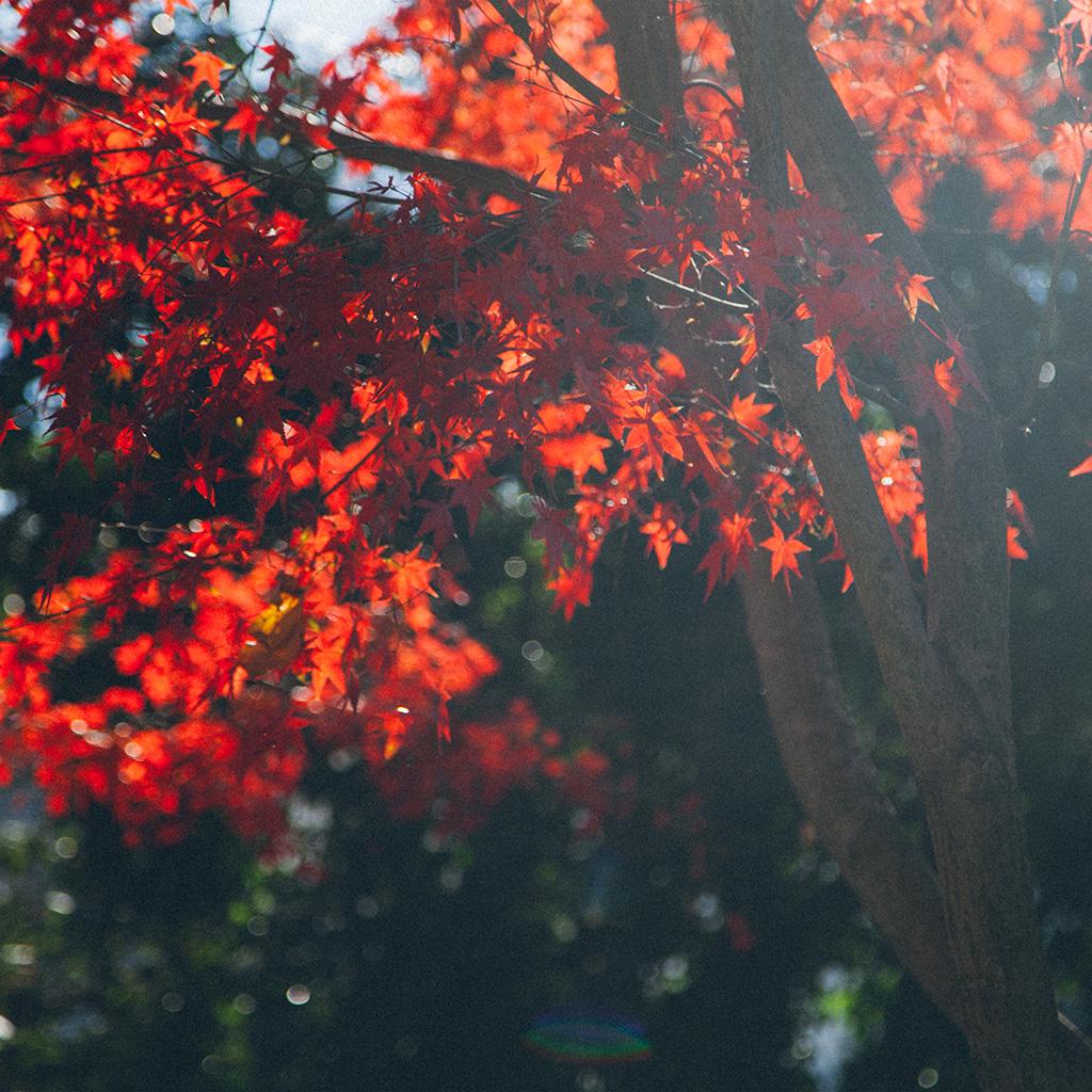 Papersco Ipad Wallpaper Nt22 Fall Tree Autumn Nature