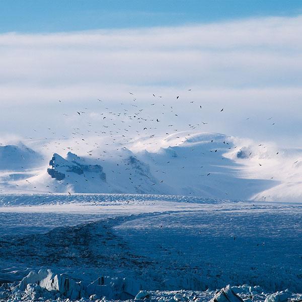 iPapers.co-Apple-iPhone-iPad-Macbook-iMac-wallpaper-nt56-winter-bird-nature-wallpaper