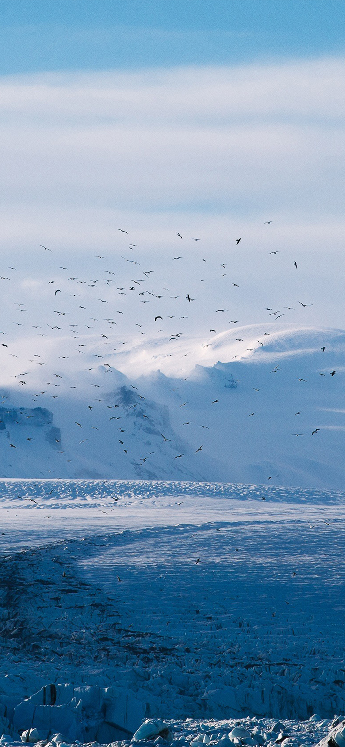 iPhoneXpapers.com-Apple-iPhone-wallpaper-nt56-winter-bird-nature
