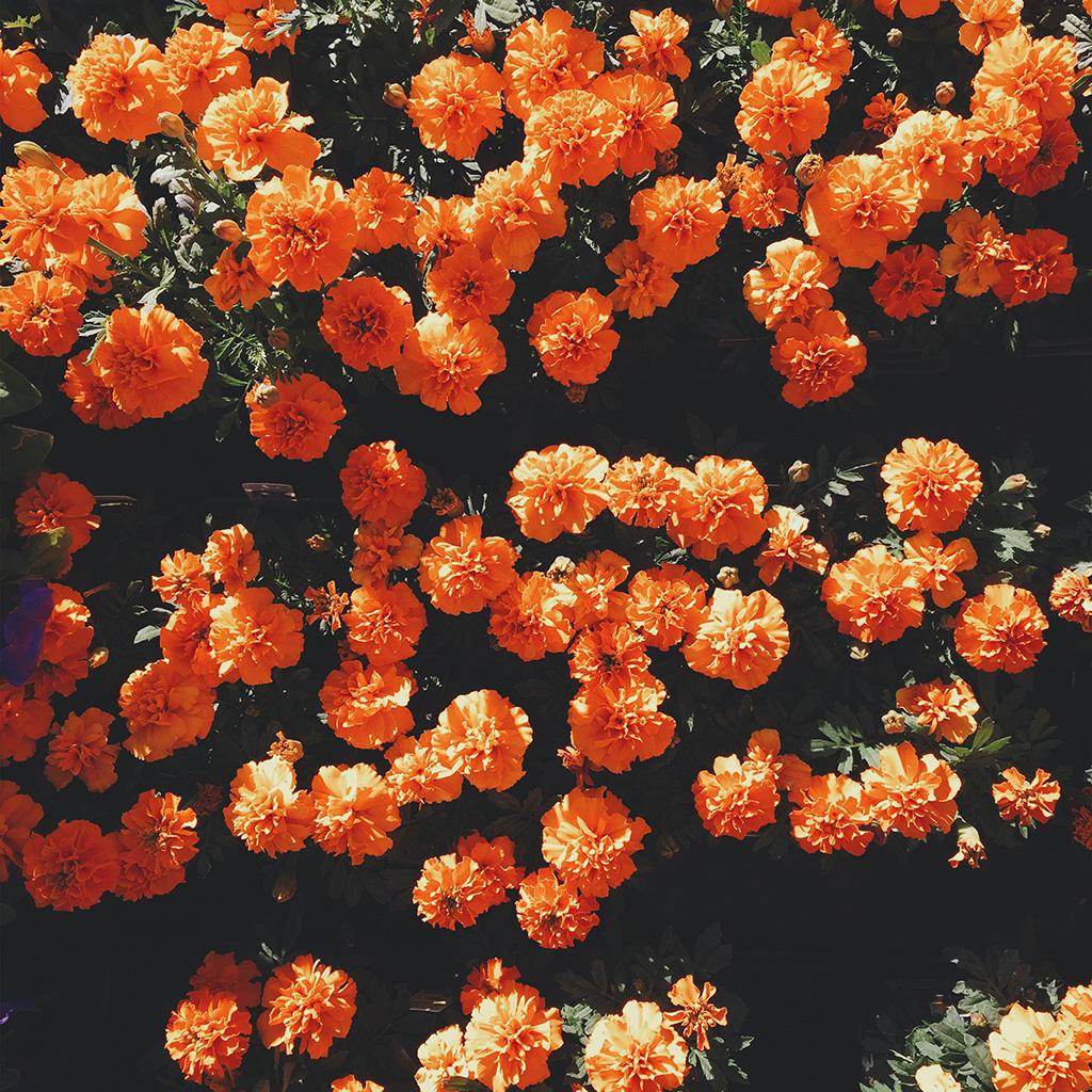 wallpaper-nt72-flower-red-summer-nature-wallpaper