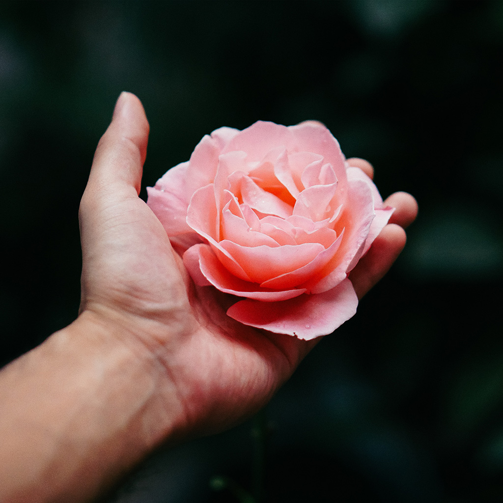 wallpaper-nt73-hand-flower-rose-nature-wallpaper