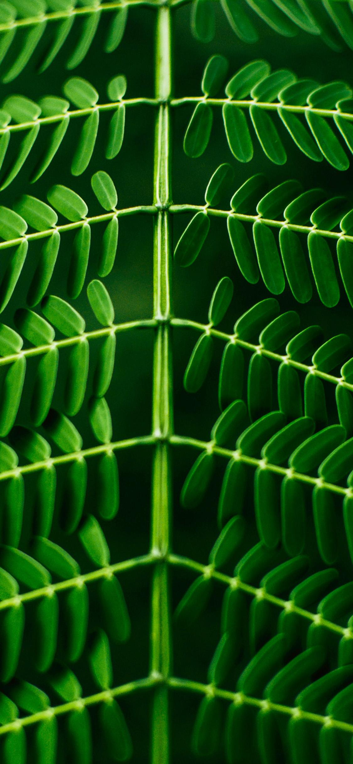 Nu01 Leaf Green Nature Wallpaper