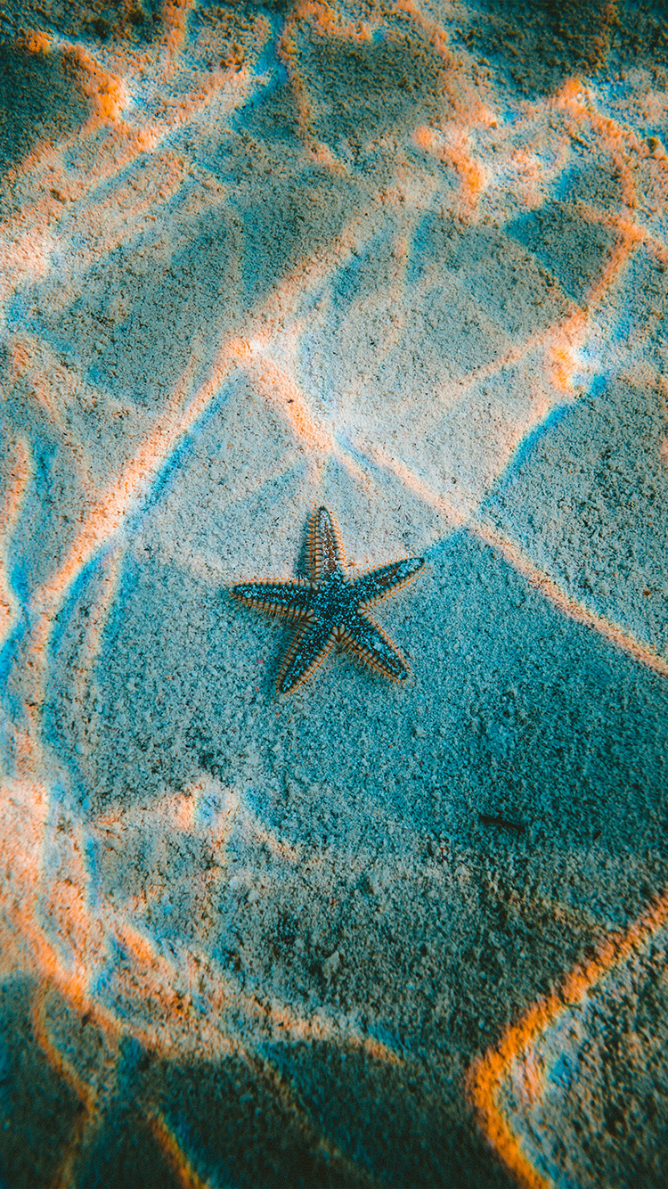 iPhone6papers.co-Apple-iPhone-6-iphone6-plus-wallpaper-nu23-starfish-sea-beach-nature