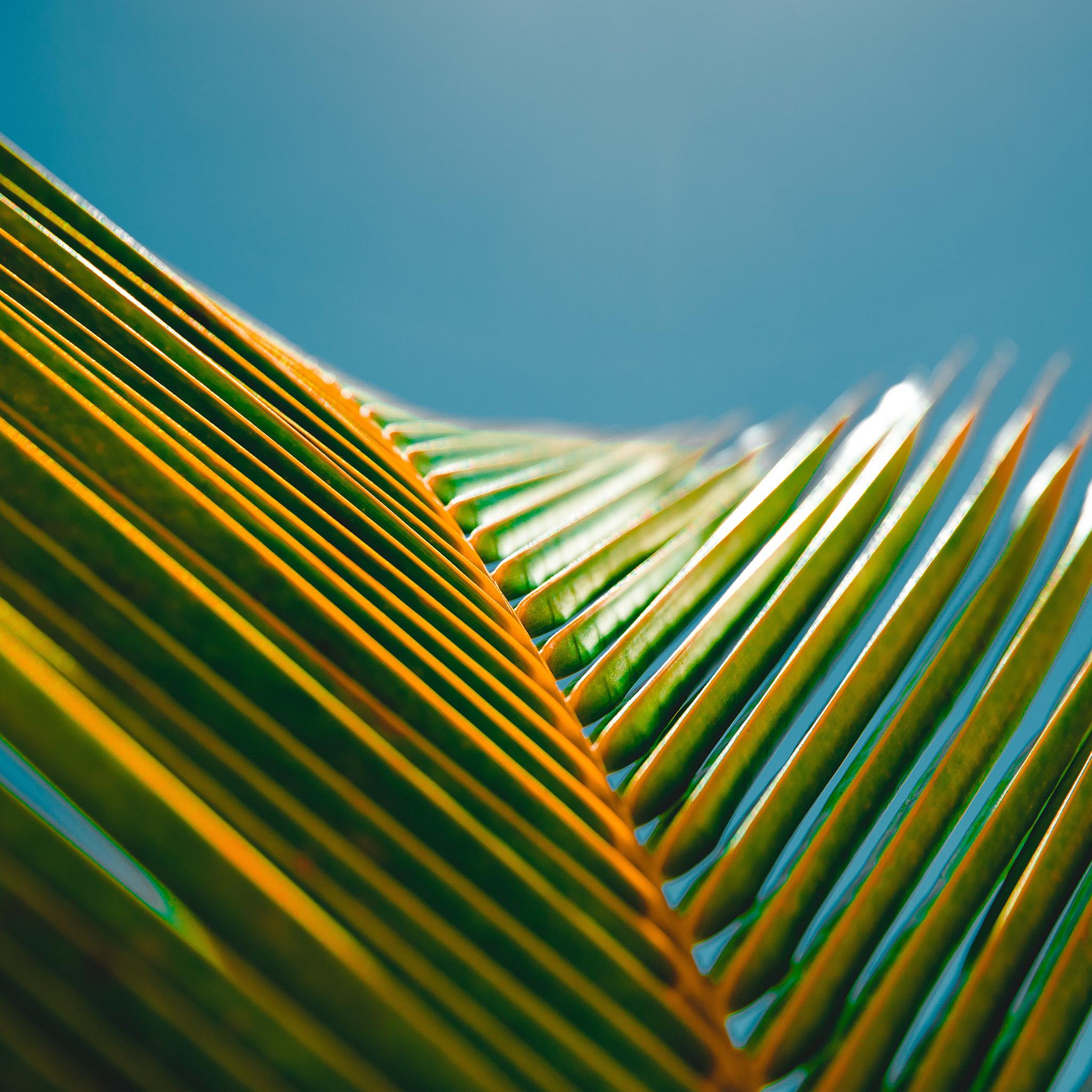 Nu25-leaf-flower-summer-simple-nature-wallpaper