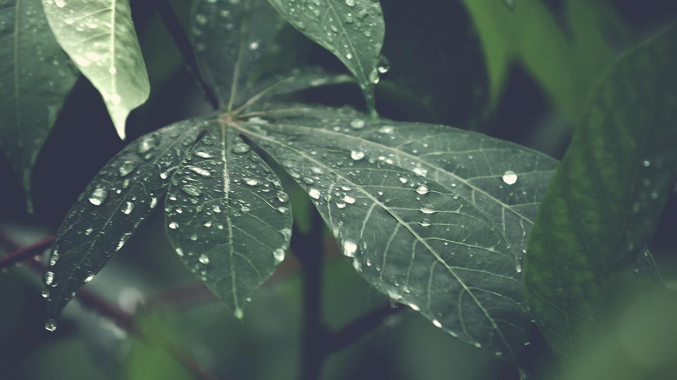 Beautiful Wallpaper Macbook Rain - papers  Graphic_97214.jpg