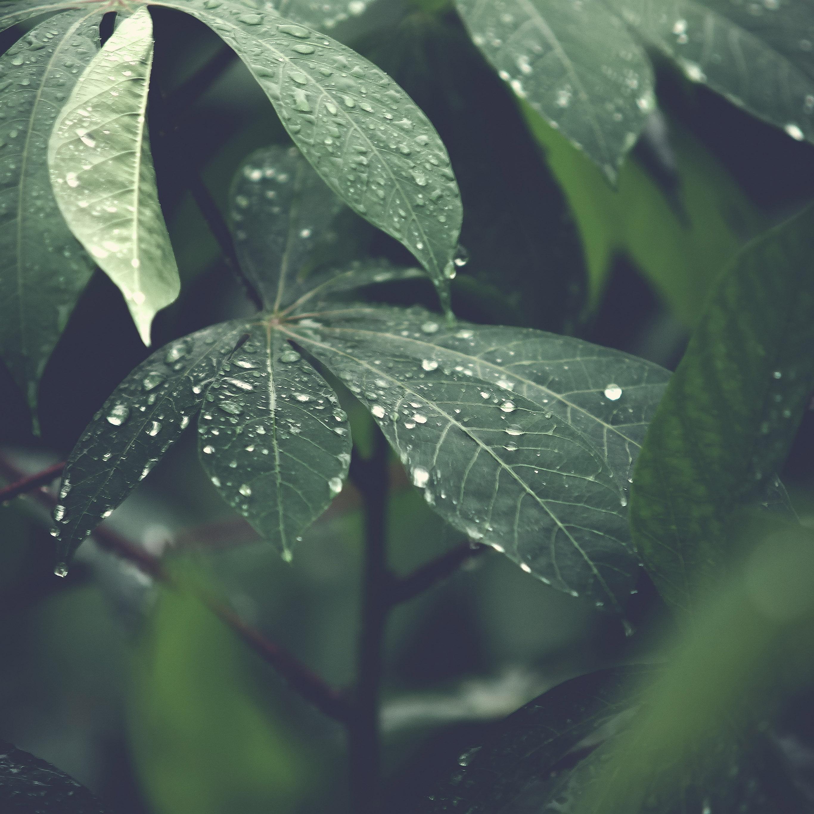 Nature Wallpaper Rain