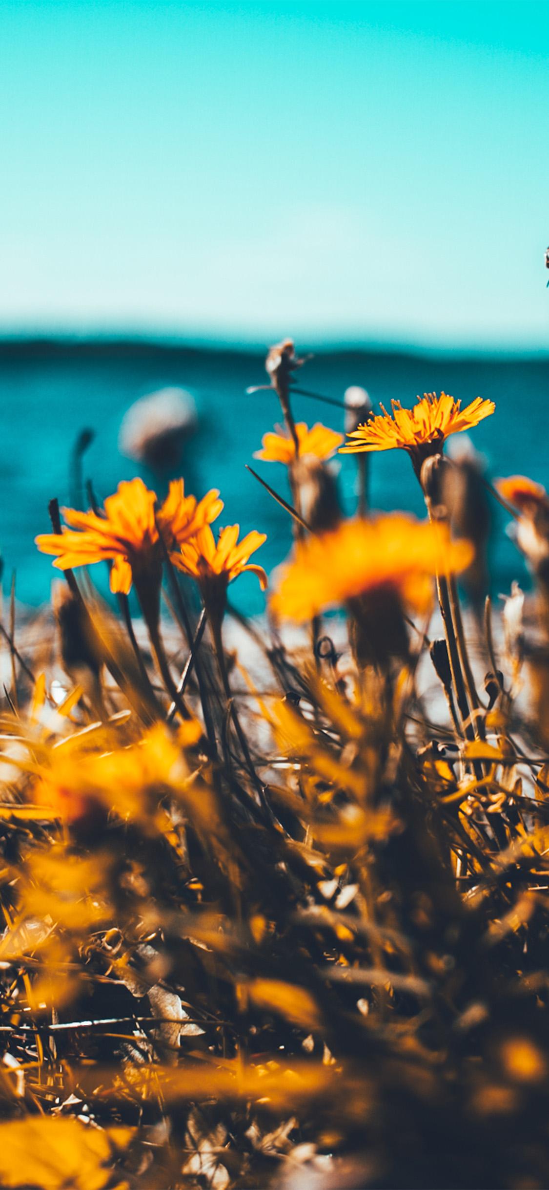 Iphonexpapers Com Iphone X Wallpaper Nu64 Flower Summer Spring