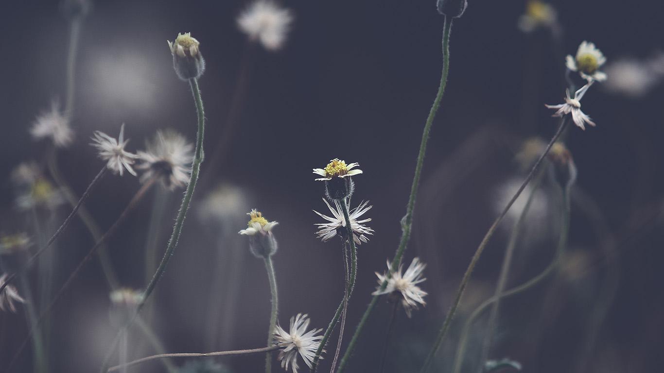 desktop-wallpaper-laptop-mac-macbook-air-nu75-flower-dark-bokeh-nature-wallpaper
