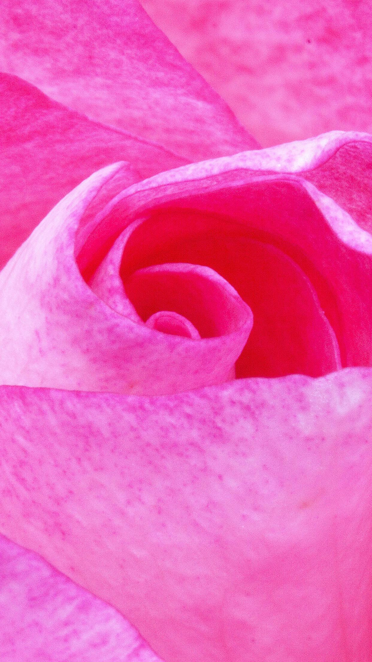 Red And Pink Bedroom: Nu90-flower-red-pink-rose